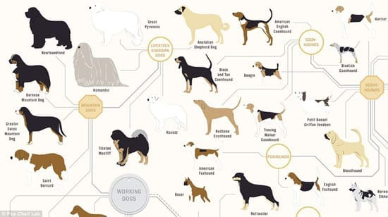 A selection of working dogs