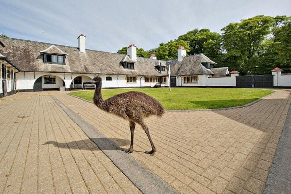 Amongst the current residents of White Horse Stables is an emu called Bruce