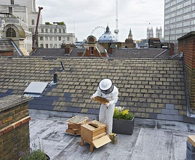The hotel's rooftop is home to 200,000 Buckfast bees