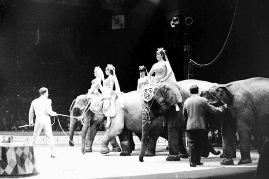 Elephants performing at the Billy Smart's New World Circus