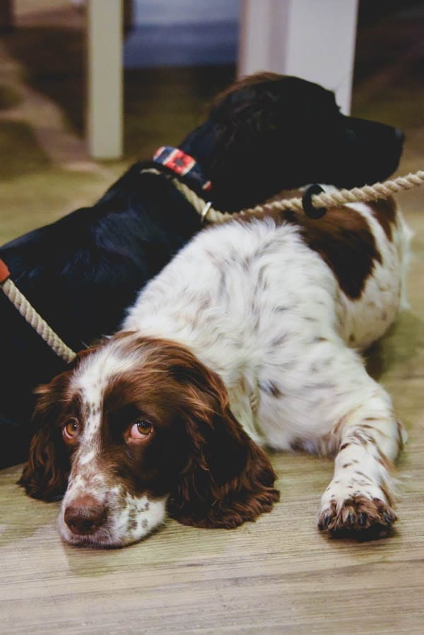Orvis' Dog Festival – Laura Bott reports on Orvis hosting a dog friendly event at their Lower Regent Street store in London – Photographs by Ashley Timms Photography