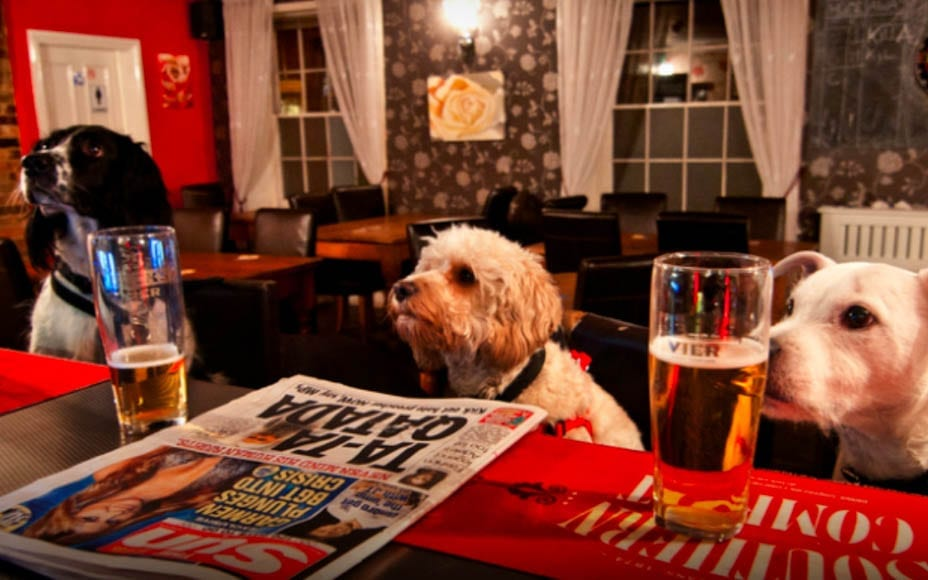 Brexiteer Tim Martin's Dog's Dinner – Wetherspoons owner Tim Martin has followed up on banning foreign booze including Moët & Chandon and now banned dogs from his pubs.