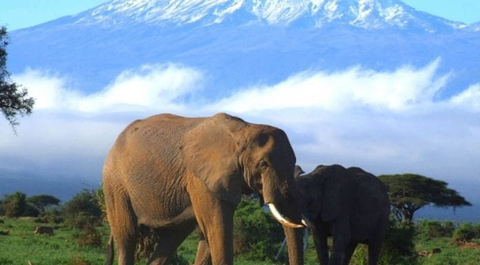 Picture of the Week – Honouring Elephants – 'The Steeple Times' urges readers to support the International Fund for Animal Welfare this Christmas.