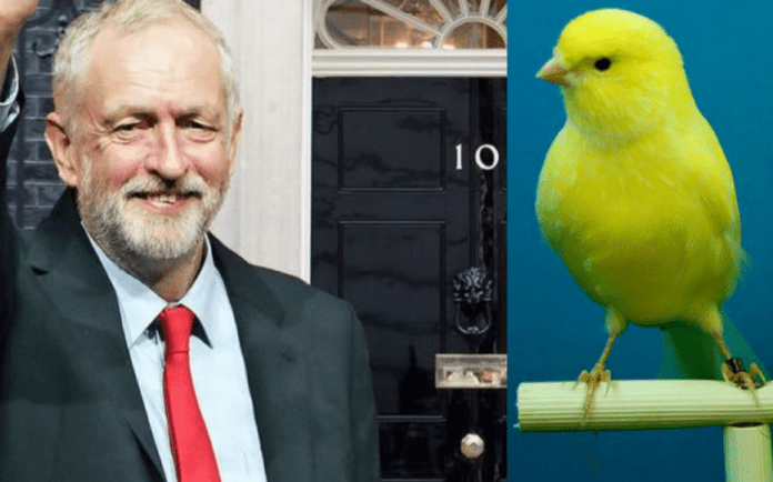 "During Coronavirus 'The Canary' Claims Corbyn Still Hasn't Croaked – That 'The Canary' is still lauding Jeremy Corbyn as ""the best Prime Minister we never had"" about sums up that sorry shower of a rag's grasp on the current state of British politics."