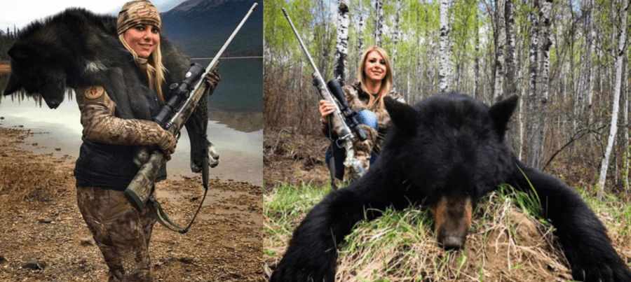 Hurrah for Hamish! Hamish the bear and Larysa Switlyk bear slayer – Just as Hamish, the first polar bear born in the UK in 25 years moves from Scotland to Yorkshire, our petition to ban the bear slayer Larysa Switlyk from Instagram shoots over 5,000 signatures.